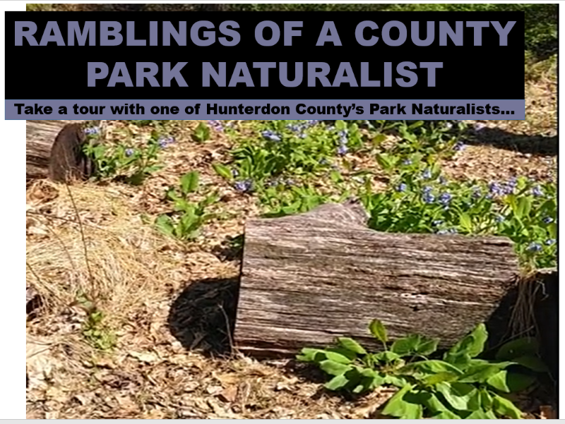 Ramblings of a County Park Naturalist